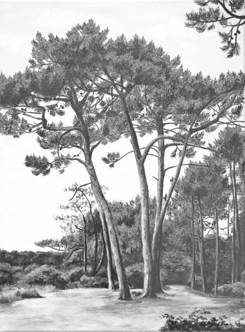 paysage des landes en grisaille